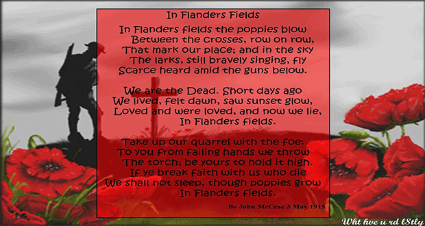 flanders-poppies