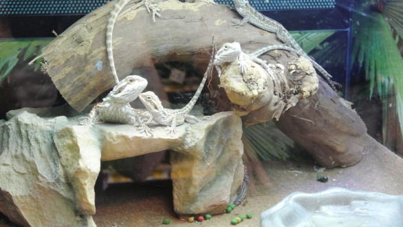 some of the animals on display for sale. The animals are never put on display when they arrive at the store. The stress on the animal is a concern. Birds, reptiles and other small creatures  are handled with the utmost care store operations manager, Drew Overman said.