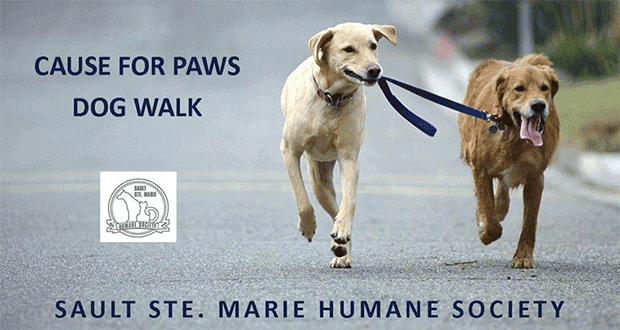 Cause for Paws Dog Walk