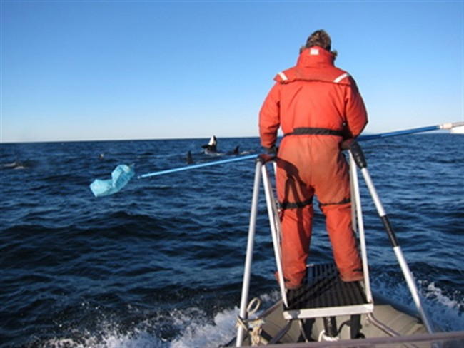 whale poop research
