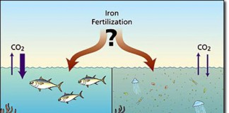 ocean iron fertilisation