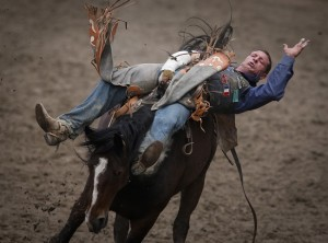 calagary stampede