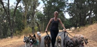 pack walk dogs