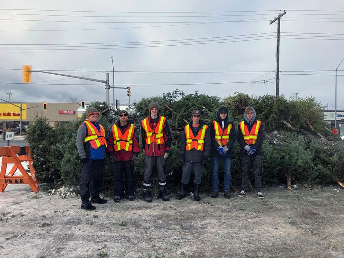 Clean North Tree Recycling