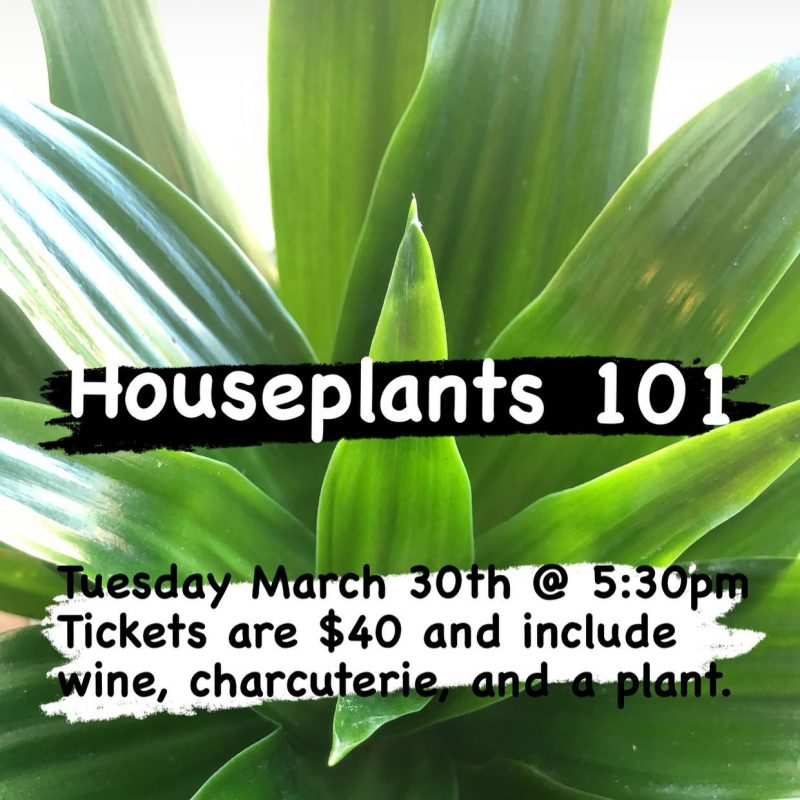 Flowers With Flair - Houseplants 101
